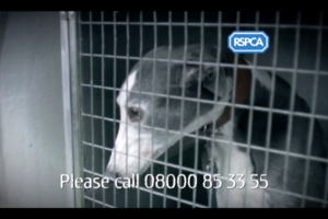 rspca-house-of-horrors