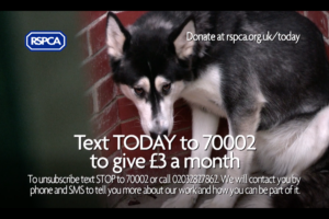 rspca-today
